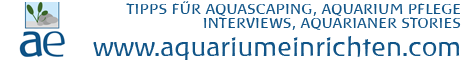 Aquarium einrichten - Tipps, Tricks, Stories