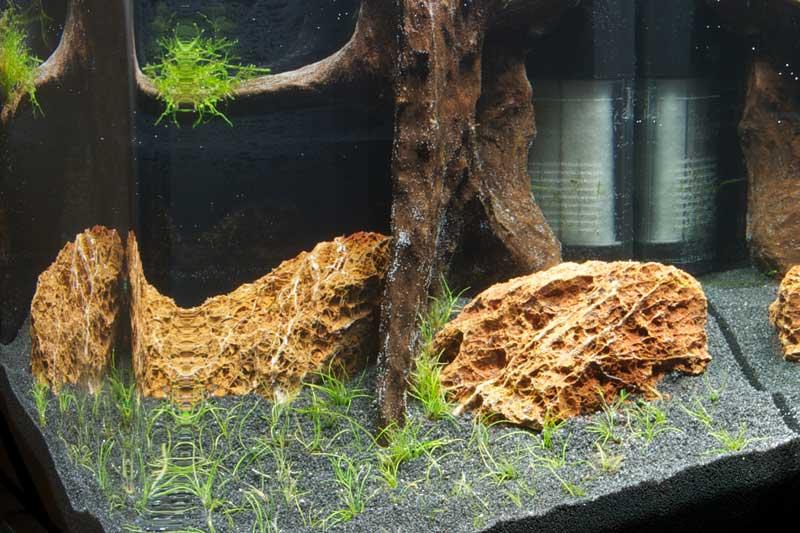 aquarium einrichten start wie richte ich mein aquarium ein. Black Bedroom Furniture Sets. Home Design Ideas