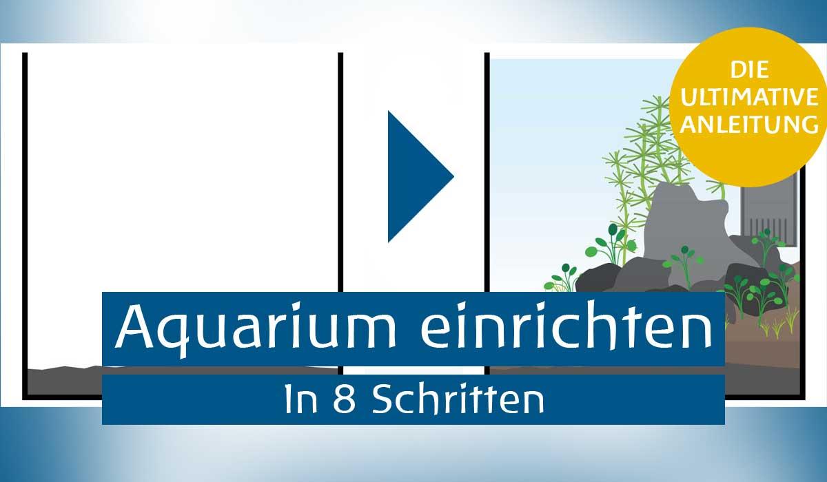 aquarium einrichten anleitung wie richte ich mein aquarium ein. Black Bedroom Furniture Sets. Home Design Ideas