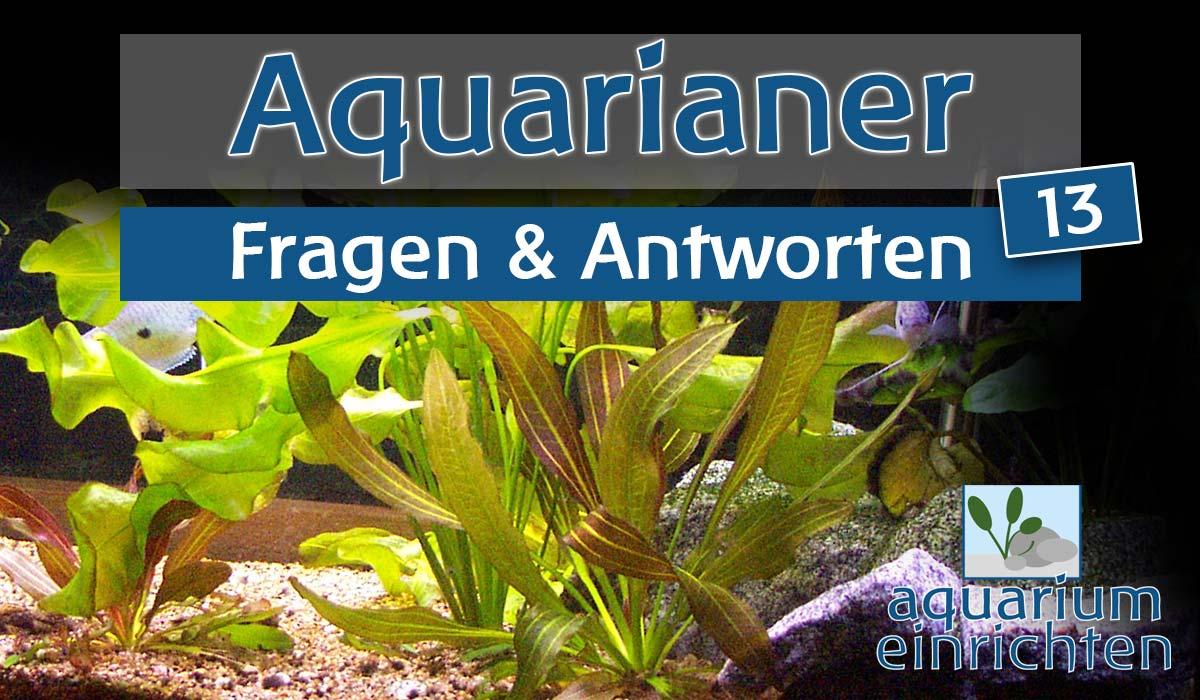 f a 13 neue aquarien und sicherer wasserwechsel bei junggarnelen wie. Black Bedroom Furniture Sets. Home Design Ideas