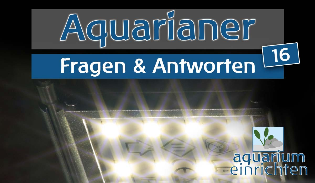 f a 16 kosten f r aquascape umstieg auf led und garnelen im art aquarium aquariumeinrichten. Black Bedroom Furniture Sets. Home Design Ideas