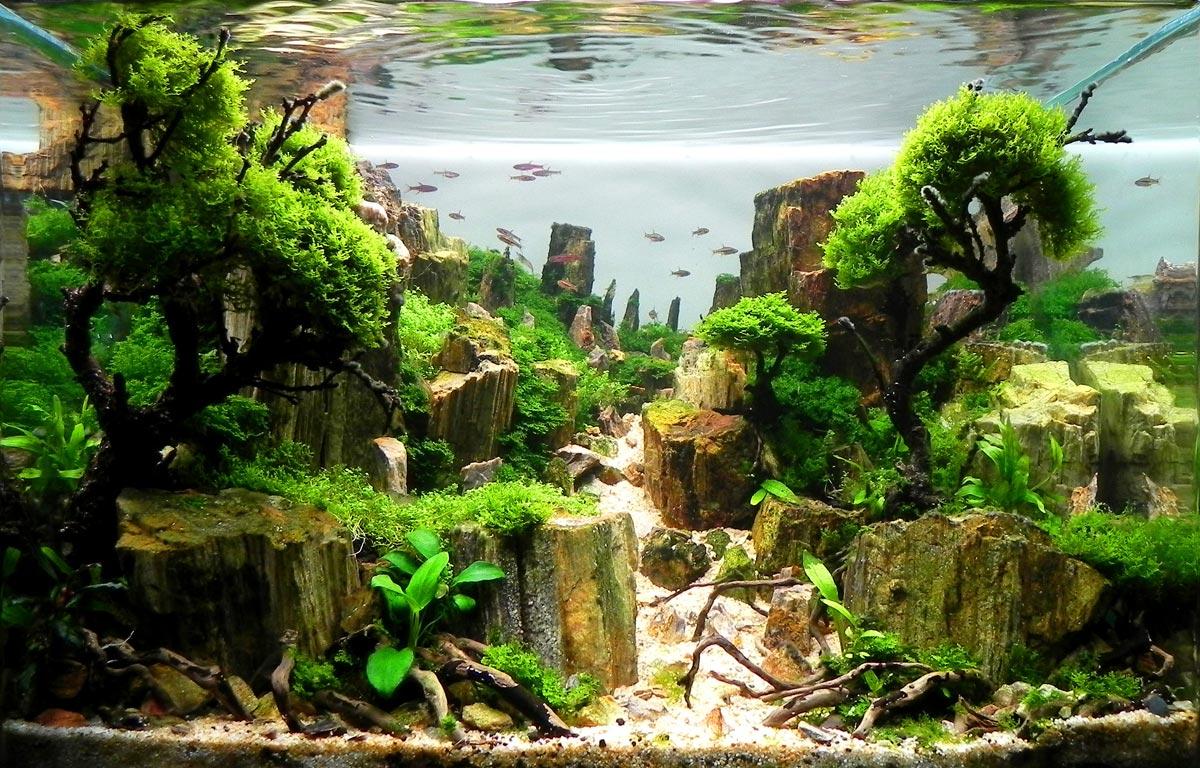 ideen fr aquarium einrichten kleine aquarien einrichten. Black Bedroom Furniture Sets. Home Design Ideas