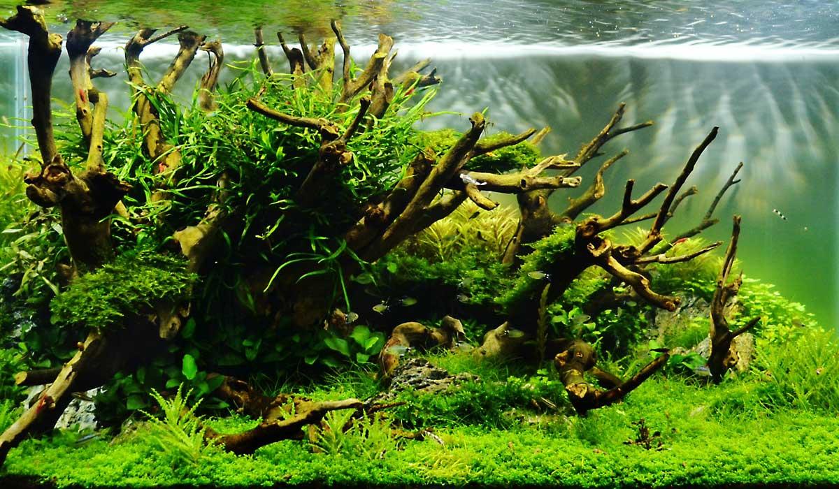 Ae Fragen Amp Antworten 02 Aquariumeinrichten Com Wie Richte Ich Mein Aquarium Ein