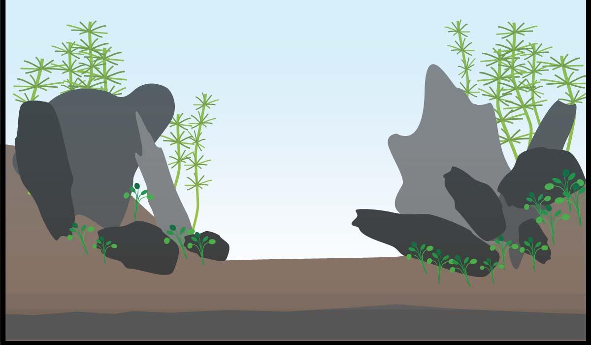 5 Patentrezepte F 252 R Dein Aquascape Layout Aquariumeinrichten Com Wie Richte Ich Mein