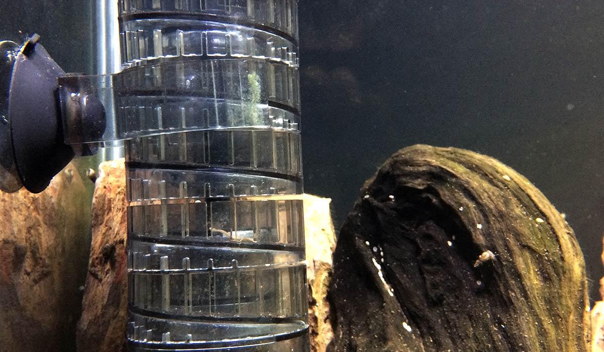 Eine Bio Co2 Anlage Bauen Aquariumeinrichten Com Wie Richte Ich