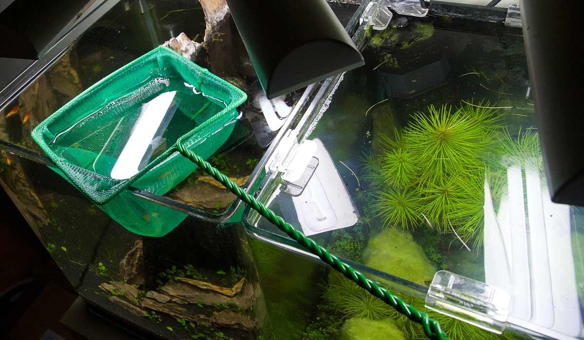 fische einfach mit dem netz fangen wie richte ich mein aquarium ein. Black Bedroom Furniture Sets. Home Design Ideas