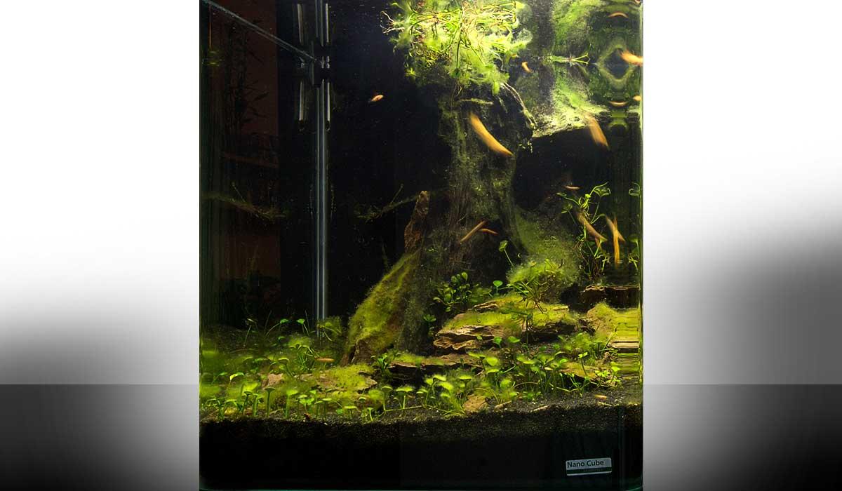 mein erstes nano aquarium wie richte ich mein aquarium ein. Black Bedroom Furniture Sets. Home Design Ideas