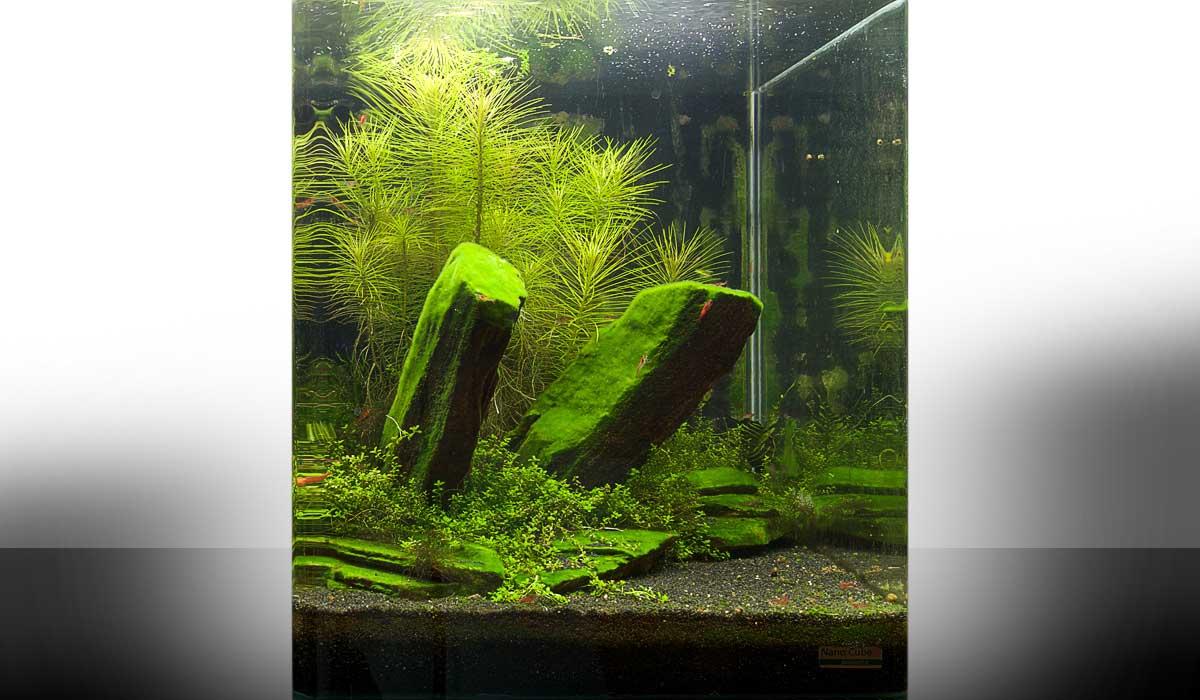 mein zweites nano aquarium wie richte ich mein aquarium ein. Black Bedroom Furniture Sets. Home Design Ideas
