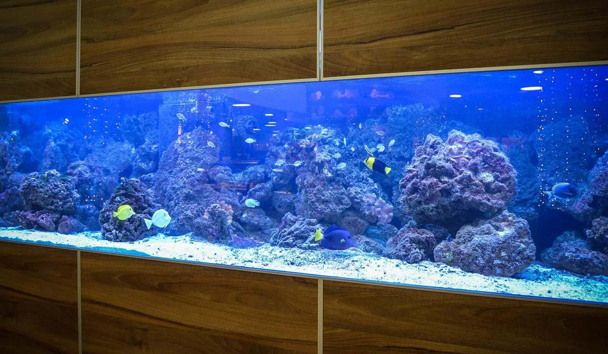 aquarium kernsanierung step by step wie richte ich mein aquarium ein. Black Bedroom Furniture Sets. Home Design Ideas