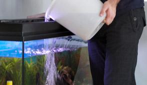 Aquarien pflege wie richte ich for Aquarium wasserwechsel
