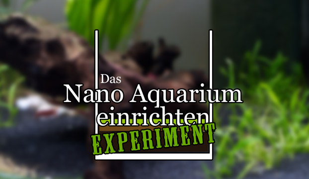 nano aquarium einrichten experiment teil 1. Black Bedroom Furniture Sets. Home Design Ideas