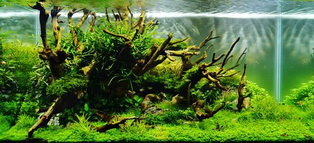 Interview mit Adrie Baumann - aquariumeinrichten.com - Wie richte ich ...
