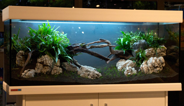 aquascaping tipps von oliver knott wie richte ich mein aquarium ein. Black Bedroom Furniture Sets. Home Design Ideas