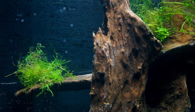 nano aquarium einrichten experiment teil 4 wie richte ich mein. Black Bedroom Furniture Sets. Home Design Ideas