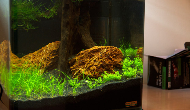 nano aquarium einrichten experiment teil 7. Black Bedroom Furniture Sets. Home Design Ideas