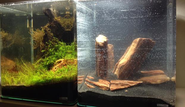 nano aquarium einrichten experiment 2 teil 1 wie richte ich mein. Black Bedroom Furniture Sets. Home Design Ideas